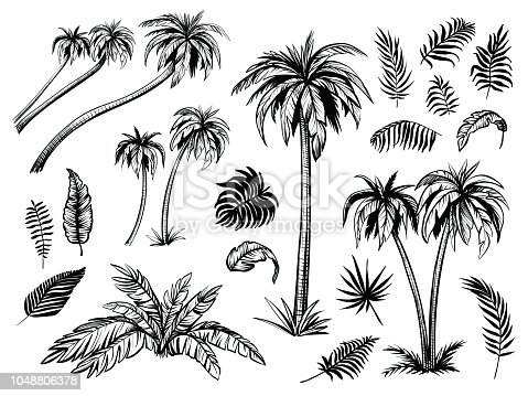 Palm trees and leaves. Black line silhouette isolated on white background. Vector sketch illustration.