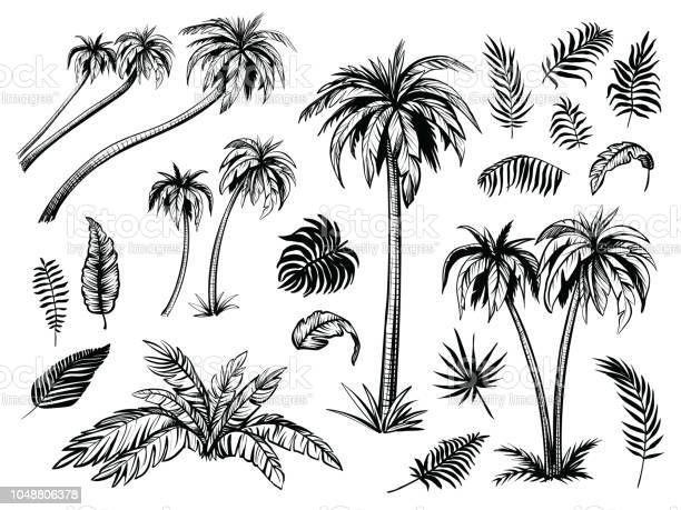 Palm Trees Free Photoshop Brushes At Brusheezy