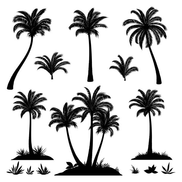 palm trees and plants silhouettes - palm tree stock illustrations