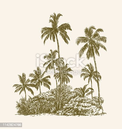 Drawing of palm trees and tropical thickets on the sand