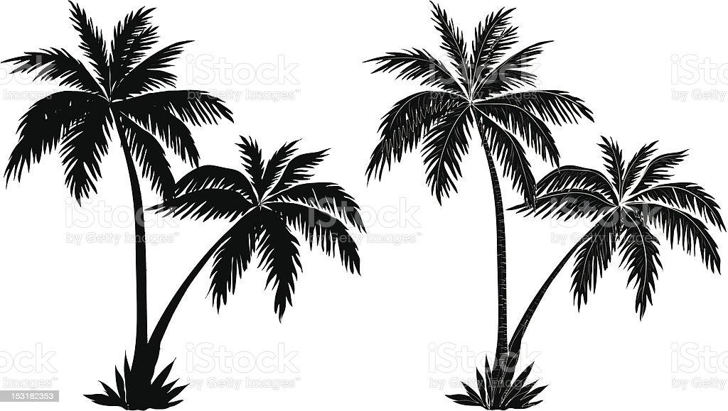 Palm trees, black silhouettes vector art illustration