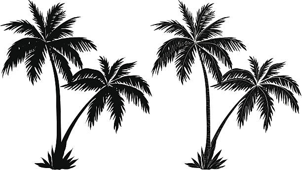 Best Palm Tree Black And White Illustrations, Royalty-Free ...