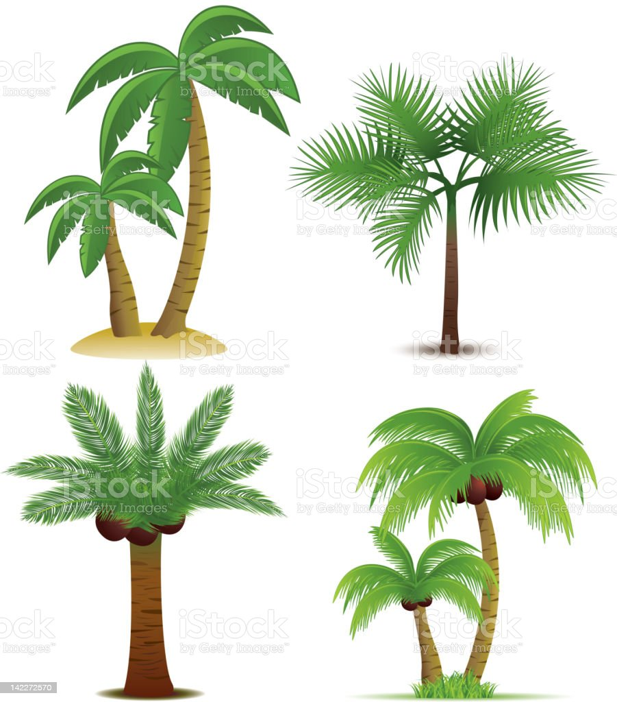 Palm trees collection vector art illustration