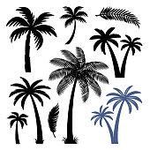 Palm trees design elements set isolated on white background. Vector illustration