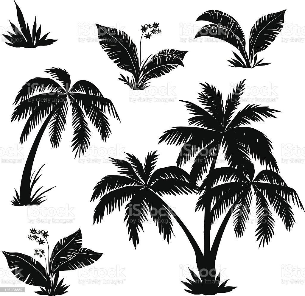 Palmy, drzewa, kwiaty, trawy, sylwetki - Grafika wektorowa royalty-free (Afryka)