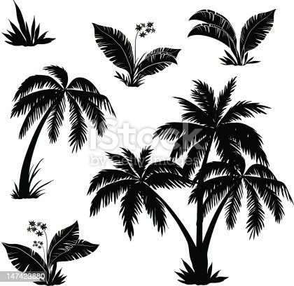 Palm trees, flowers and grass, black silhouettes on white background. Vector