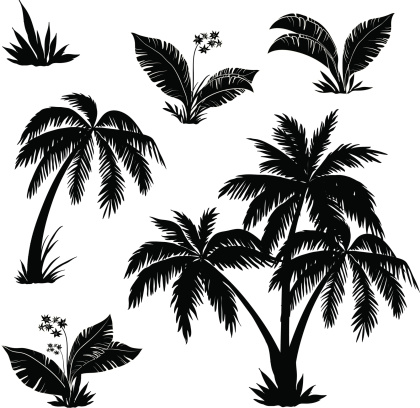 Palmy Drzewa Kwiaty Trawy Sylwetki - Stockowe grafiki wektorowe i więcej obrazów Afryka