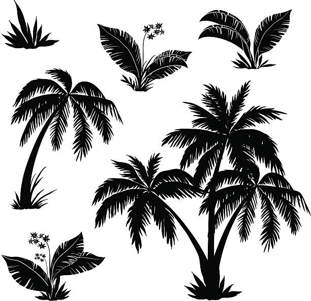 stockillustraties, clipart, cartoons en iconen met palm trees, flowers and grass, silhouettes - grassenfamilie