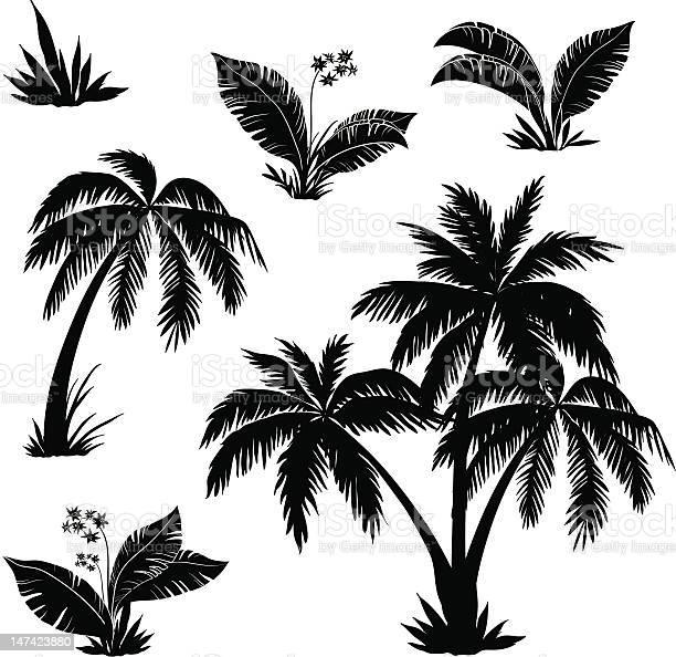 Palm Trees Flowers And Grass Silhouettes Stockvectorkunst en meer beelden van Aangelegd