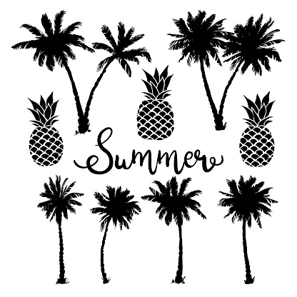 Palm trees icons set