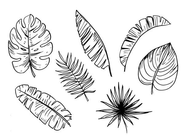 Royalty Free Hawaiian Flower Outline Drawing Clip Art ...  Hawaiian Palm Tree Drawings