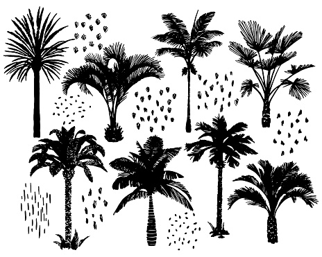Palm trees set. Exotic tropical plants collection. Sketch style graphic technique. Hand drawn..