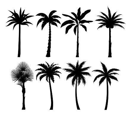 Palm trees silhouettes vector illustrations set