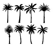 Palm trees silhouettes vector illustrations set. Exotic plants black simple isolated design elements pack. Leaves and trunks shapes collection on white background. Tropical coconut palms
