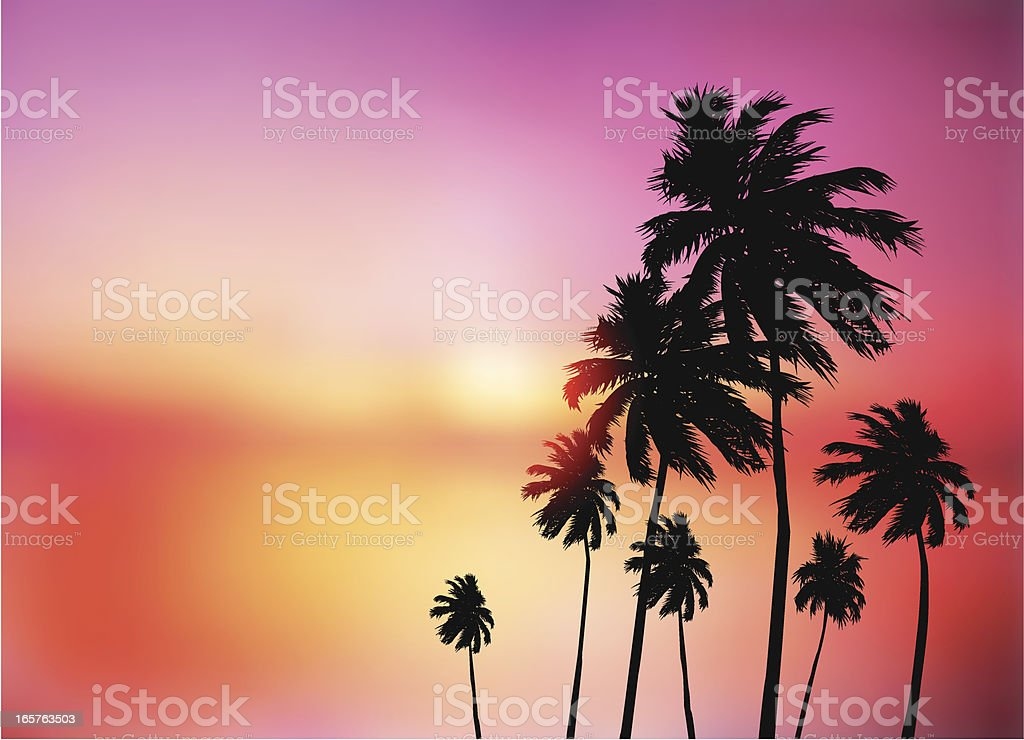 Palm trees sunset royalty-free palm trees sunset stock vector art & more images of back lit
