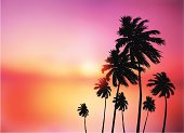 Vector illustration of silhouetted palm trees against a dramatic sunset sky.