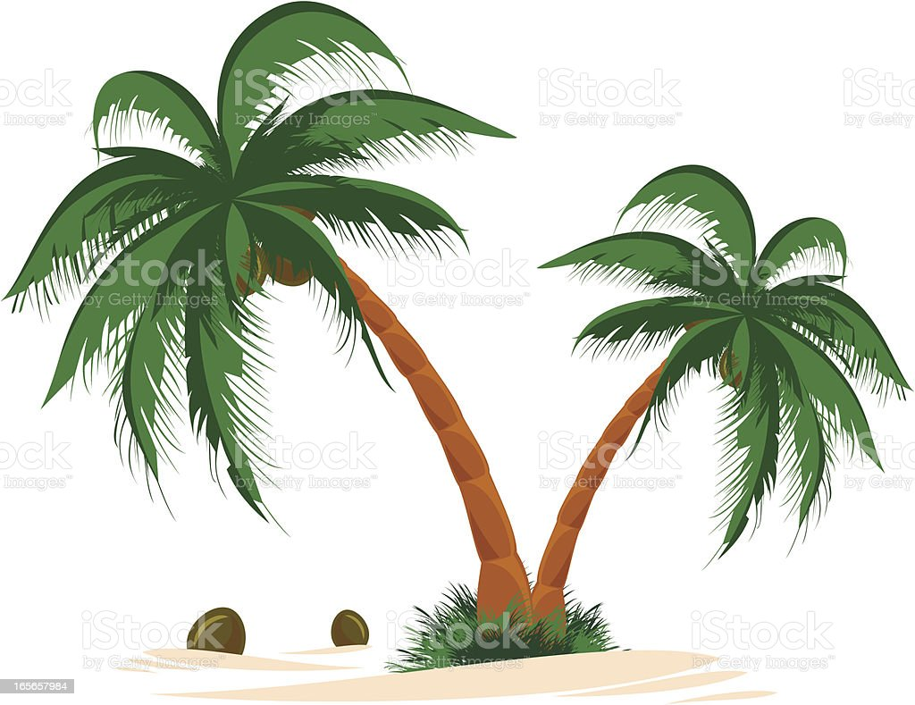 Palm Trees vector art illustration