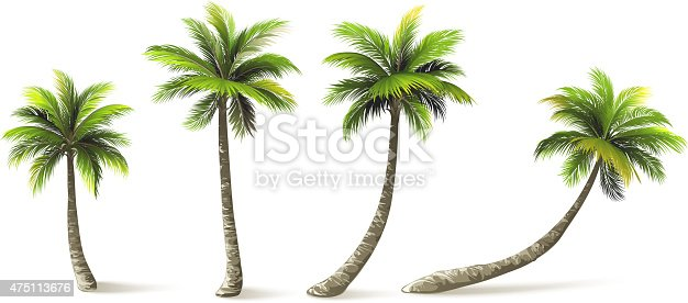 istock Palm Trees 475113676