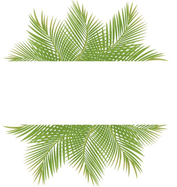 ilustrações, clipart, desenhos animados e ícones de palmeiras - coqueiro
