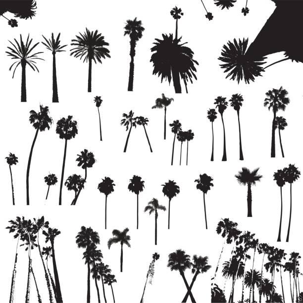 illustrations, cliparts, dessins animés et icônes de palmiers arbres - palmier
