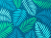 Palm frond or fern tropical background.