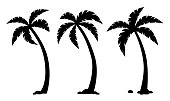 Vector palm tropical trees. Set of black silhouettes isolated on white background.