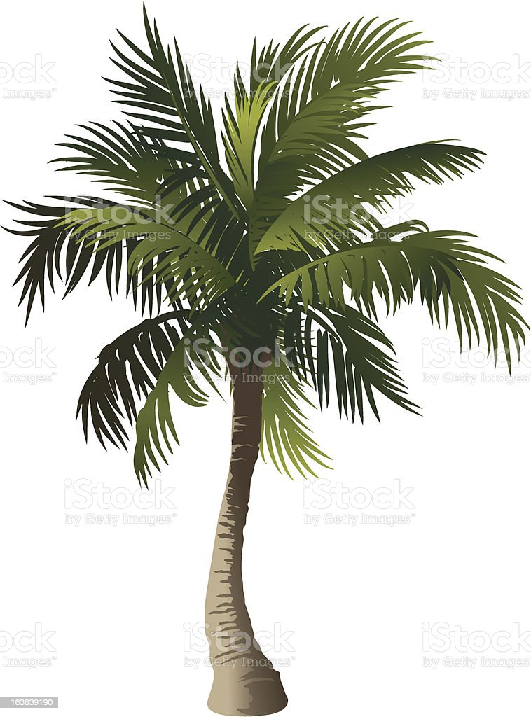 Palm royalty-free stock vector art