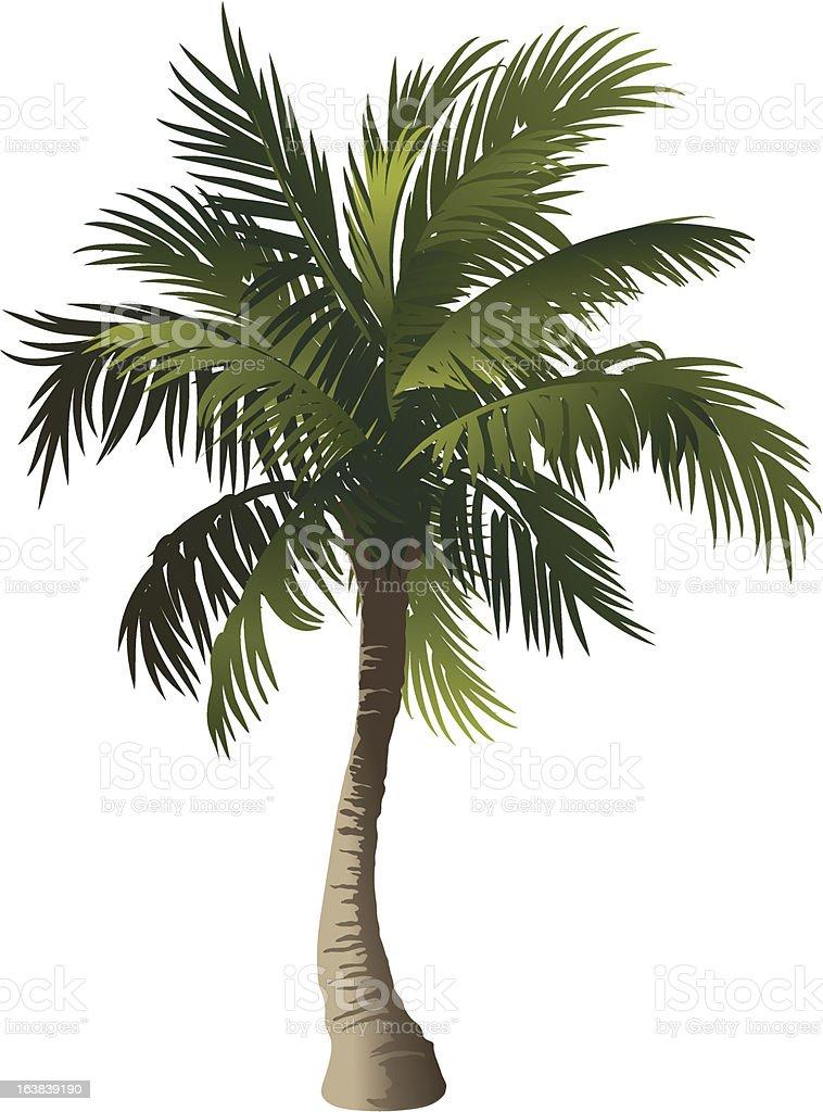 Palm vector art illustration