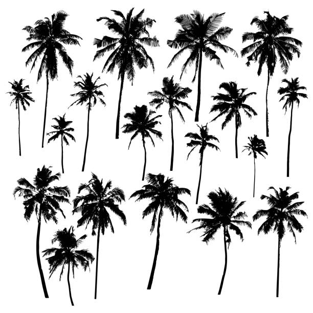 palm_tree - palm tree stock illustrations