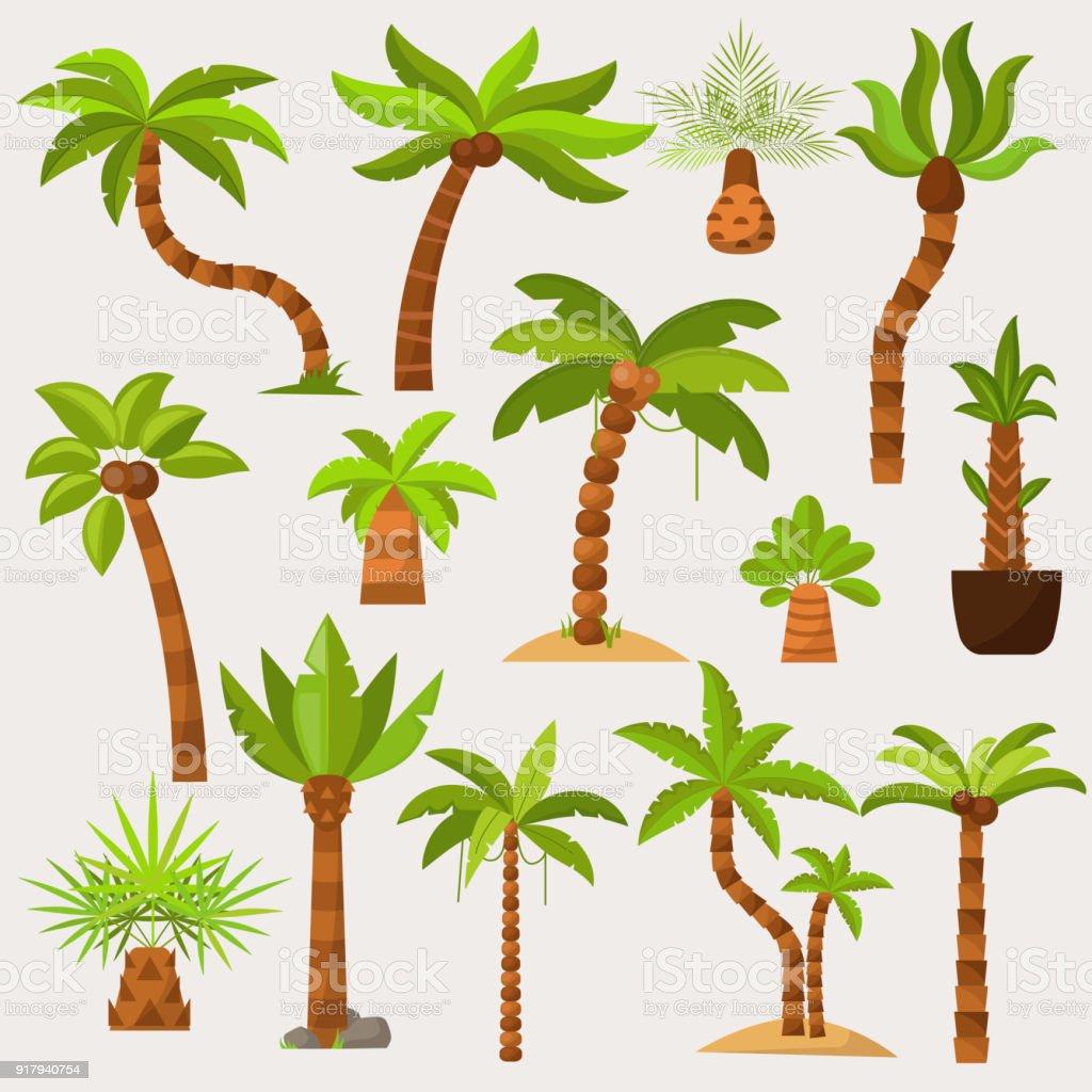 Palmavektor Palmaceous Tropischer Baum Mit Kokosnuss Oder Grüne ...