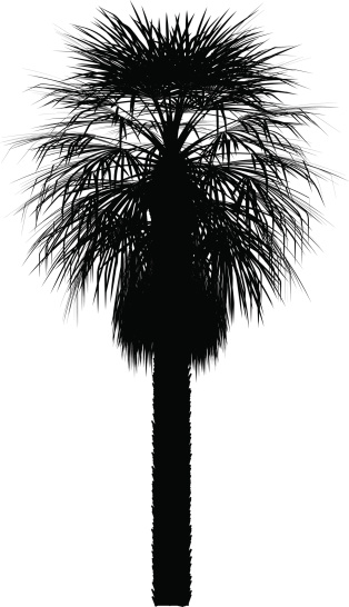 Palma vector silhouette