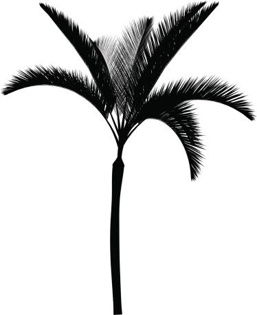 Palma vector