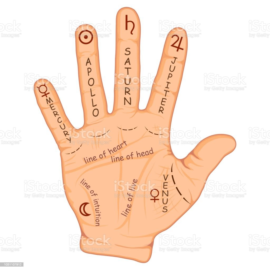 Zodiac Las Palmas #4: Palmistry-or-chiromancy-hand-with-signs-of-the-planets-and-zodiac-vector-id1051107912