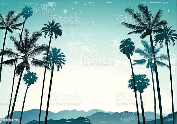 Palms landscape vector id165814785?b=1&k=6&m=165814785&s=612x612&h=tev1gnojqutxynbi3n0krib4jdiuui9o oqud9hnejm=