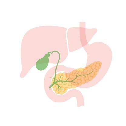 pancreas and gallbladder
