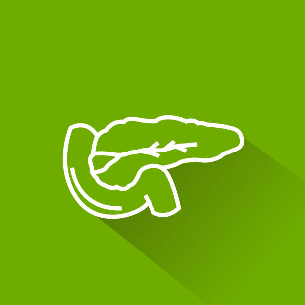 bauchspeicheldrüse-symbol - enzyme stoffwechsel stock-grafiken, -clipart, -cartoons und -symbole