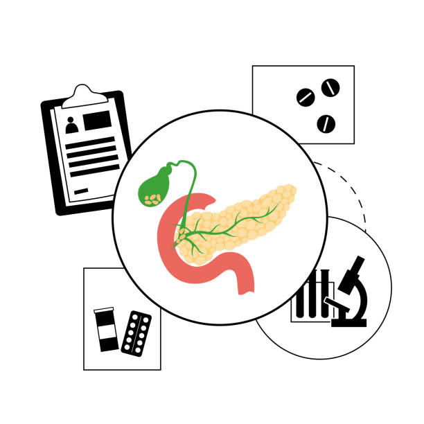 Pancreas logo concept Pancreas, duodenum and gallbladder anatomy in the human body. Digestive system concept and Gastrointestinal clinic logo. Healthcare medical center vector isolated illustration. Internal organ poster. islet of langerhans stock illustrations