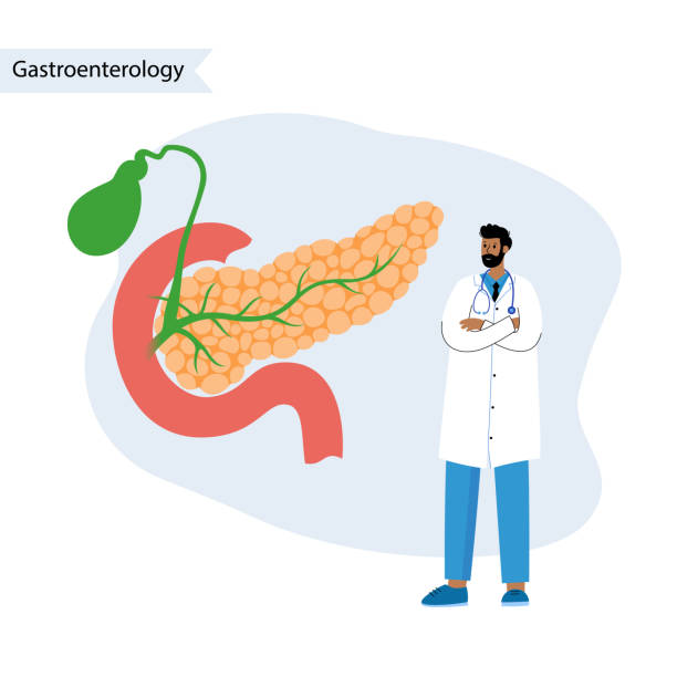 Pancreas logo concept Pancreas, duodenum and gallbladder anatomy. Gastroenterologist help. Digestive system concept. Gastrointestinal clinic logo. Healthcare medical center vector illustration. Internal organ poster. islet of langerhans stock illustrations