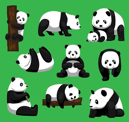 Panda Bear Nine Poses Cartoon Vector Illustration