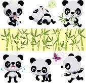Babies Panda Bears.