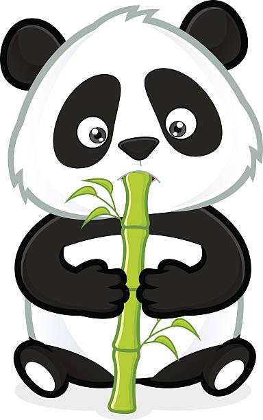 Pandas Essen Bambus – Vektorgrafik