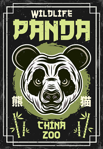 Panda head vintage colored poster for china zoo vector decorative illustration. Layered, separate grunge textures and text with chinese hieroglyphs (signifying panda)