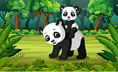 Panda with baby panda in the forest