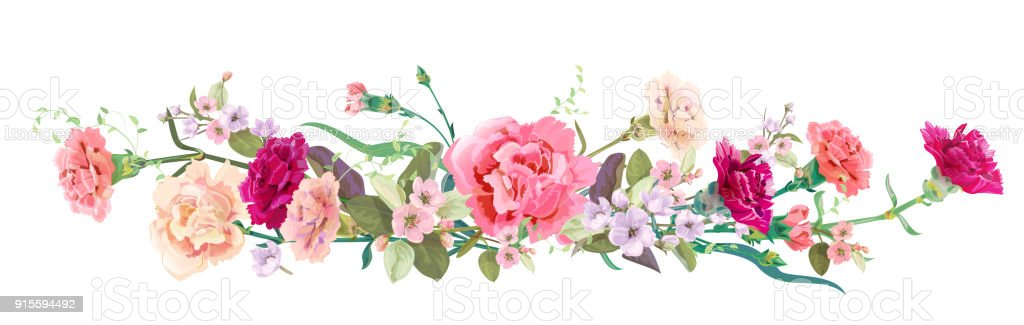 Panoramic view bouquet of carnation schabaud spring blossom panoramic view bouquet of carnation schabaud spring blossom horizontal border red pink flowers buds leaves on white background digital draw illustration in mightylinksfo
