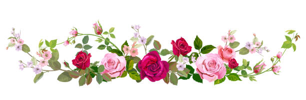 Flower Borders Illustrations, Royalty-Free Vector Graphics & Clip Art