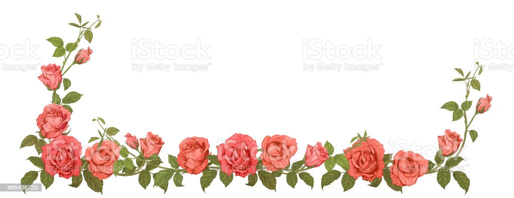 Panoramic view: garland of roses. Horizontal border: branches with pink, red flowers, buds, green leaves, white background. Illustration in engraving vintage sketch style, frame for design, vector royalty-free panoramic view garland of roses horizontal border branches with pink red flowers buds green leaves white background illustration in engraving vintage sketch style frame for design vector stock vector art & more images of arrangement