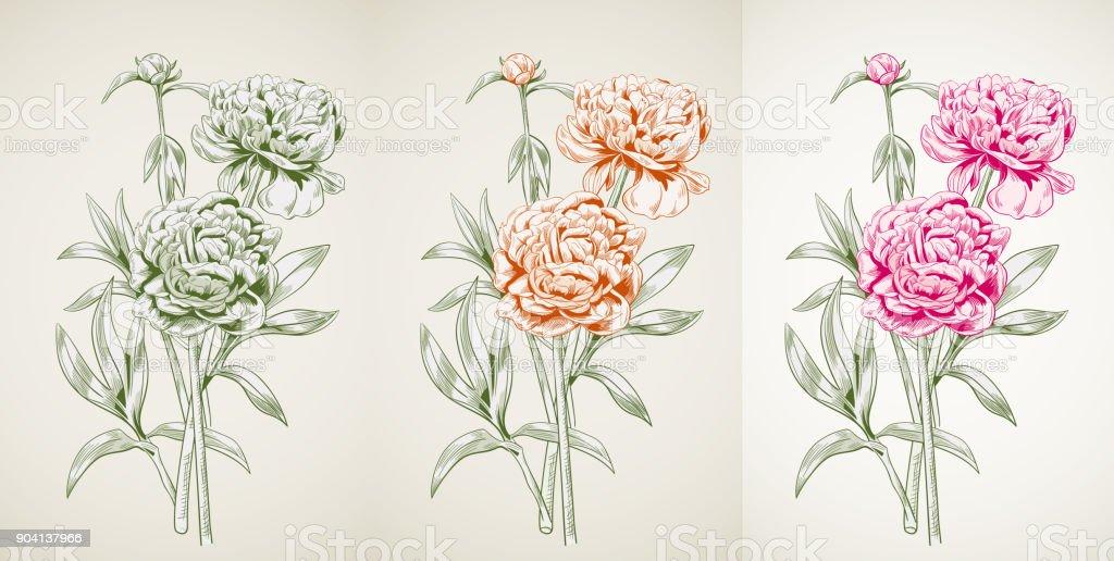 Panoramablick Von Pfingstrose Monochrome Farbige Kontur Rote Blüten ...