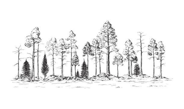 panoramic view of the forest from different trees vector art illustration