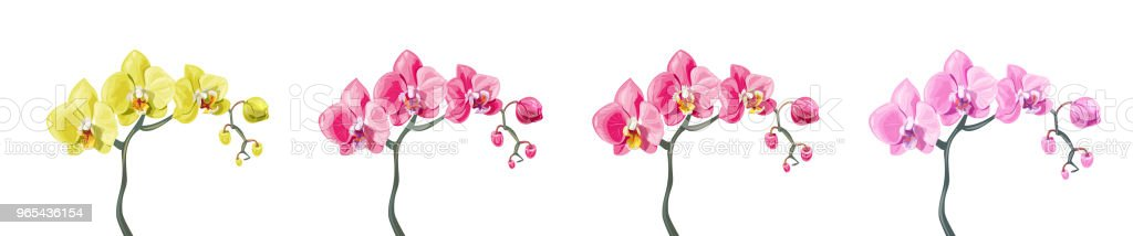 Panoramic view set Phalaenopsis orchid branches: pink, red, yellow flowers on white background. Digital draw tropical plants in watercolor style, vector botanical illustration for design royalty-free panoramic view set phalaenopsis orchid branches pink red yellow flowers on white background digital draw tropical plants in watercolor style vector botanical illustration for design stock vector art & more images of asia