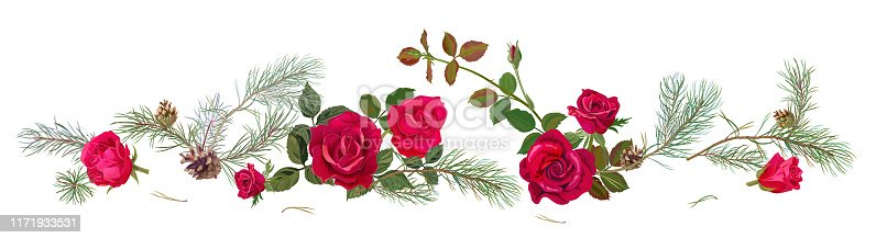 Panoramic view with red roses, pine branches, cones. Horizontal border with Christmas tree on white background. Hand draw, watercolor style, decorative botanical illustration for design, vector